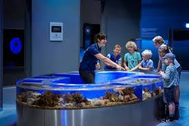 northern europe u0027s largest aquarium is a sea of fun den blå planet