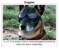 belgian malinois vermont 25 best memes about belgian malinois belgian malinois memes