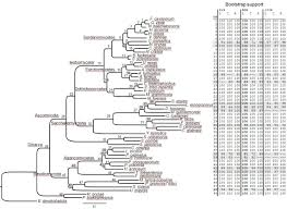 hal an automated pipeline for phylogenetic analyses of genomic