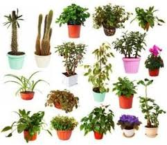 house plants expert a z index list of house plants great resource