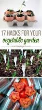5261 besten vegetable gardening bilder auf pinterest