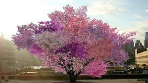 artist creates multicolored trees that grow 40 different types of