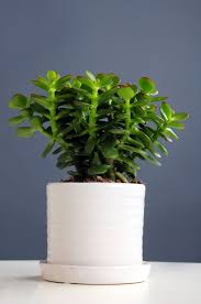 low light houseplants plants that don t require much light dress up your home with these indoor plants that don t need sunlight