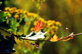 free images tree nature branch blossom sunlight leaf
