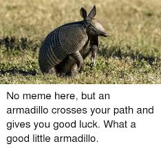 Armadillo Meme - i no meme here but an armadillo crosses your path and gives you