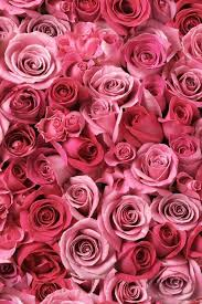 Meaning Of Pink Roses Flowers - best 25 pink flower wallpaper ideas on pinterest pink flowers