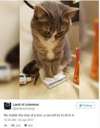 Lol Cat Meme - 19 lol cat memes pic to make you bend over laughing memes cat and