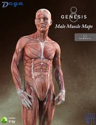Maps For Muscle Maps For Genesis 3 And 8 Male 3d Models And 3d Software