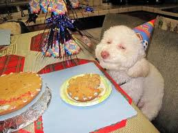 Dog Smiling Meme - north korea says this smiling dog eating a birthday cake is what s