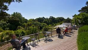 Ventnor Botanic Gardens 28 Discover Palm Trees And Prehistoric Plants At Ventnor Botanic