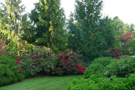 the benefits of evergreens for a beautiful landscape trees unlimited