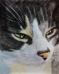 cat portraits cat paintings cat drawing