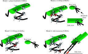 jumping in frogs assessing the design of the skeletal system by