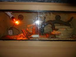 leopard gecko lighting at night custom enclosures