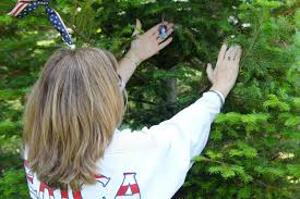 remembrance dog tags remembrance tree program wreaths across america