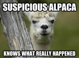 Alpaca Memes - suspicious alpaca isn t suspicious about http www alpacablankets