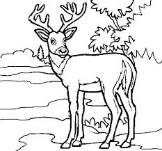 98 deer color cattpix