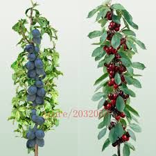 online buy wholesale miniature plants from china miniature plants