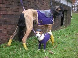 Horse Jockey Halloween Costume 21 Danes Costumes Treats Happen