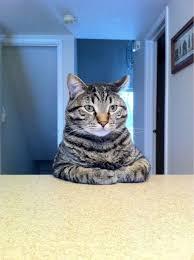 Cheezburger Meme Builder - take a seat cat blank meme template imagens para memes pinterest