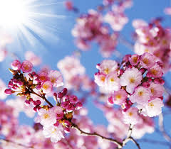 beautiful spring beautiful spring flowers hd picture 15 flowers stock photo free