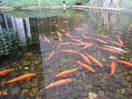 pond tips for june water gems
