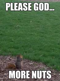 Praying Memes - praying squirrel in awe memes quickmeme
