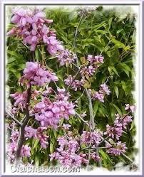les fleurs comestibles en cuisine la cuisine des fleurs recettes avec des fleurs comestibles