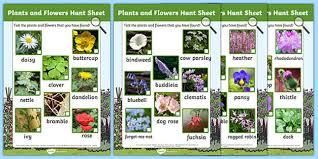 plants and flowers hunt sheet plants hunt flowers hunt