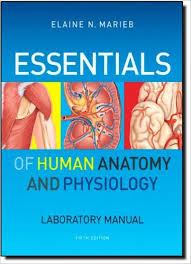 Anatomy And Physiology Pdf Free Download Essentials Of Human Anatomy And Physiology Laboratory Manual