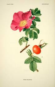 common edible medicinal ornamental plants lunarharvest