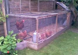 Small Space Hopper - keeping chickens in small spaces latest information on chickens