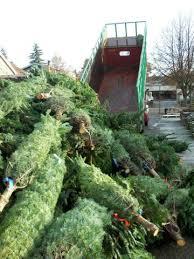 west seattle blog u2026 west seattle holidays christmas trees