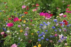 bulk seed packets wildflower seed packets thereviewsquad