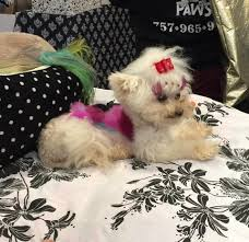 funny thanksgiving dog pictures mobile pet grooming by brook home facebook