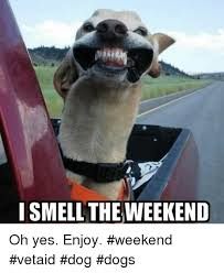 Weekend Dog Meme - i smell the weekend oh yes enjoy weekend vetaid dog dogs dogs
