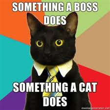 Meme Generator Copyright - business cat know your meme