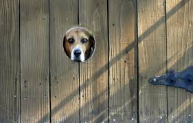 how to keep dogs and cats out of your garden nola com