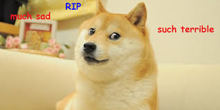Doge Girl Meme - the life and death of doge 2013 s greatest meme