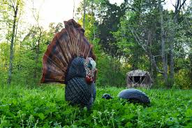 effective turkey decoy strategies for hunting out of ground blinds