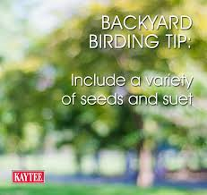 Backyard Birding Magazine 60 Best Backyard Birding Diy Bird Feeders Garden Ideas Images