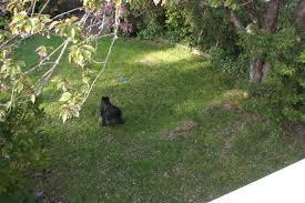 Dog In The Backyard by Mom U0027s Garden Nina U0027s Garden
