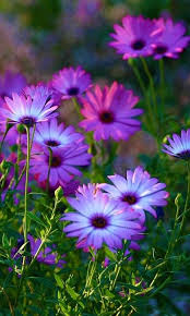 best 25 purple flowers ideas on pinterest purple wedding