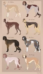 afghan hound coat colors 96873a5c1596632739bbc44879cbf8c6 jpg 596 1024 ya like dags