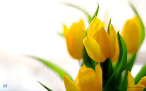 Image Of Spring Flowers by For Your Desktop Spring Flowers Wallpapers 43 Top Quality Spring