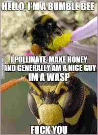 Dirty Meme Jokes - dirty bee jokes bee vs wasp meme jpg sle bios