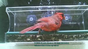 clear plastic window bird feeder large window bird feeder by rusee acrylic birdfeeder youtube