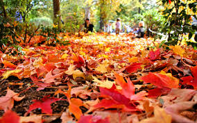 fall foliage wallpapers hd wallpaper wiki