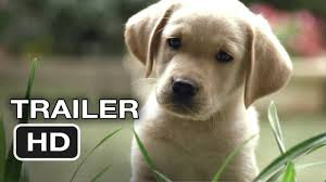 quill guide dog official trailer 1 2012 hd movie