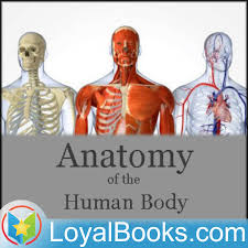 Anatomy The Human Body 18 U2013 The Ribs Anatomy Of The Human Body By Henry Gray Podcast